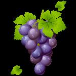 grapes-150x150
